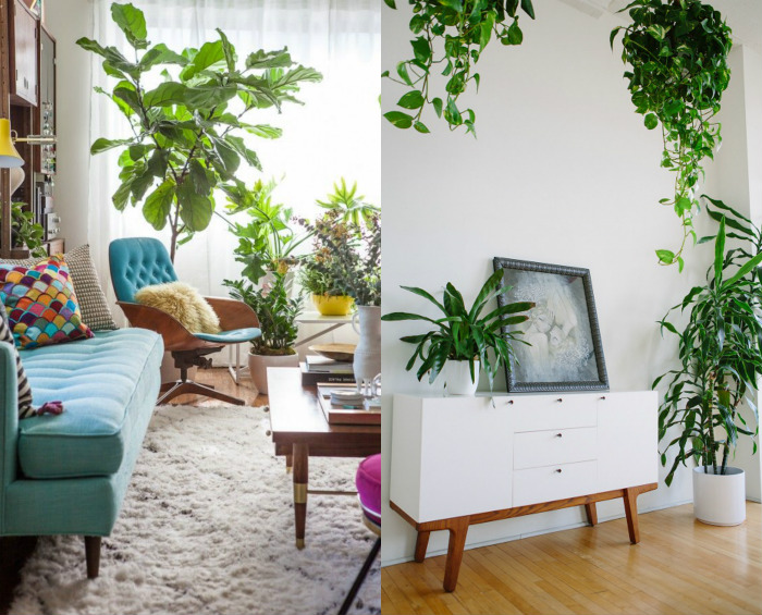 plantmodernnordic
