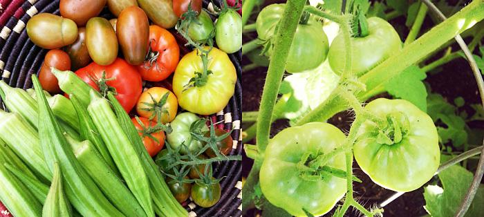 veggieharvestcollage