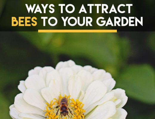 attractbeesgardenyard