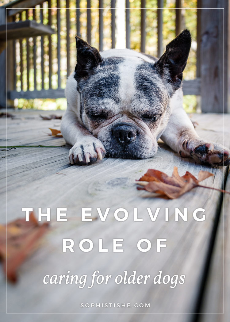 the role of a dog in Peer-reviewed summary of scientific literature related to the role of breed in dog bite risk and prevention.